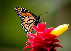 Tropinis drugelių sodas Tenerifėje