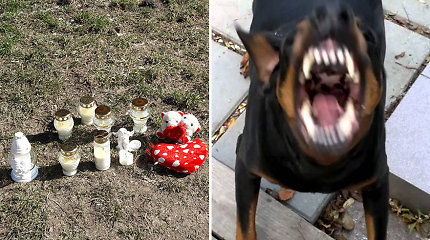 Šuns sudraskyto kūdikio tėvas buvo girtas, anksčiau jis baustas už dobermano nepriežiūrą