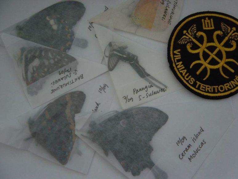 Siuntoje iš Indonezijos  – egzotiniai drugeliai.