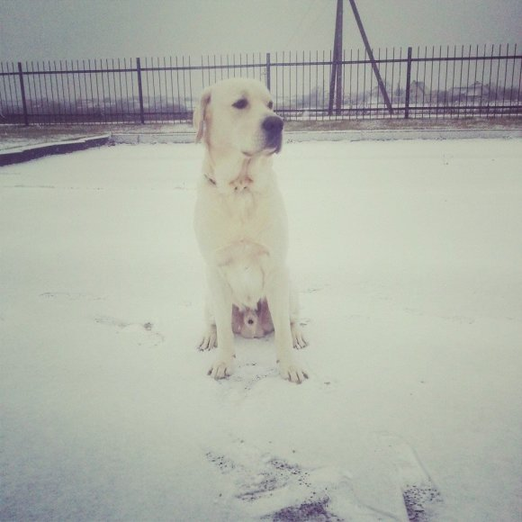 Šuo sėdi ant sniego Dzūkijoje
