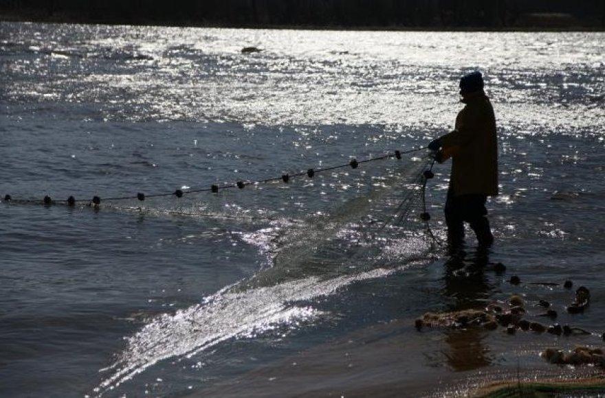 Rusnėje prasidėjusi stintų žvejyba žūklautojų nedžiugina.