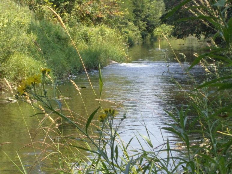 """Už Šyšos upės teršimą Šilutėje atsakys """"Biofuture"""" darbų saugos vadovas."""