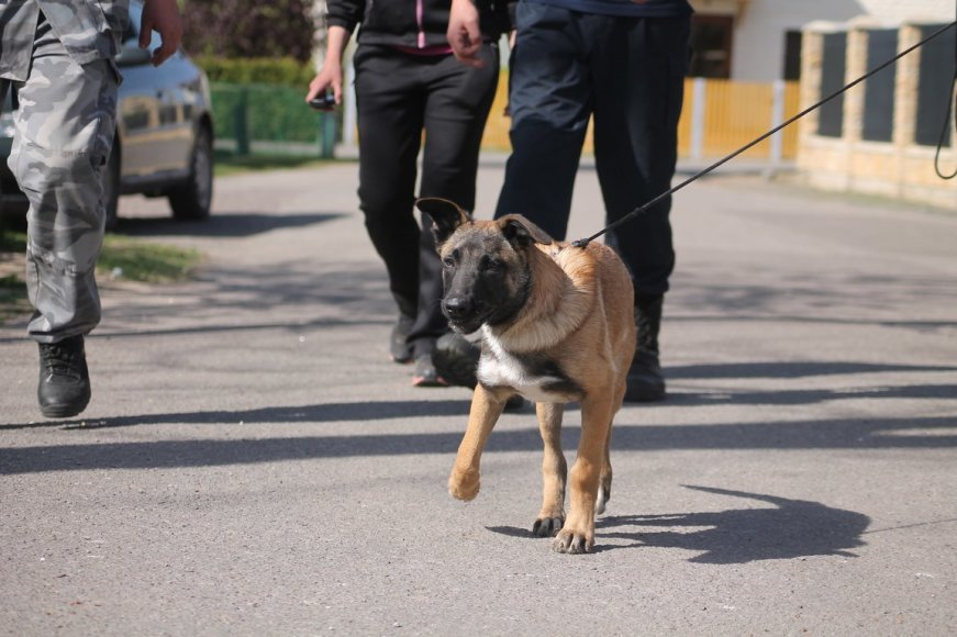 Policijos šunų mokymai