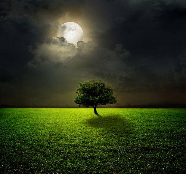 Mėnulio šviesos apšviestas medis