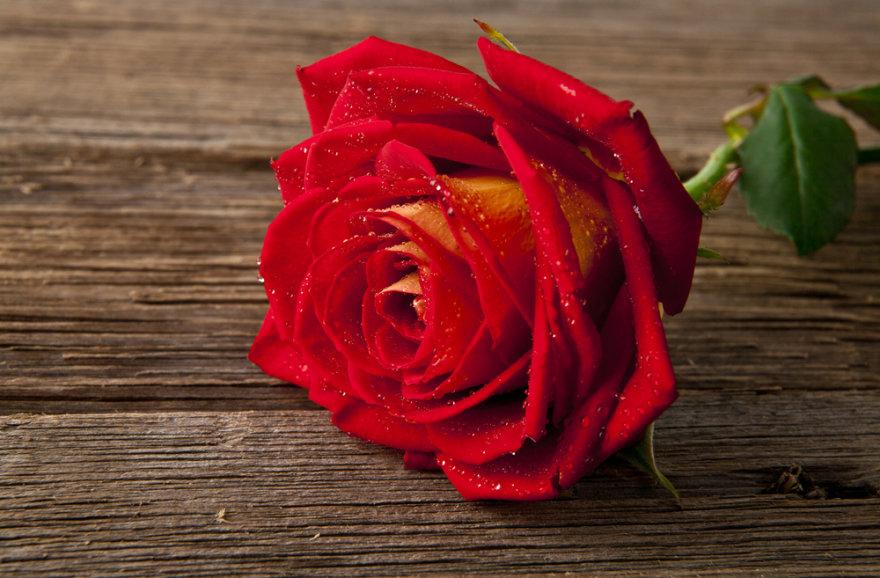 Raudona rožė