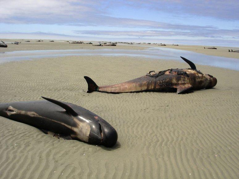 Ant kranto išmesti banginiai