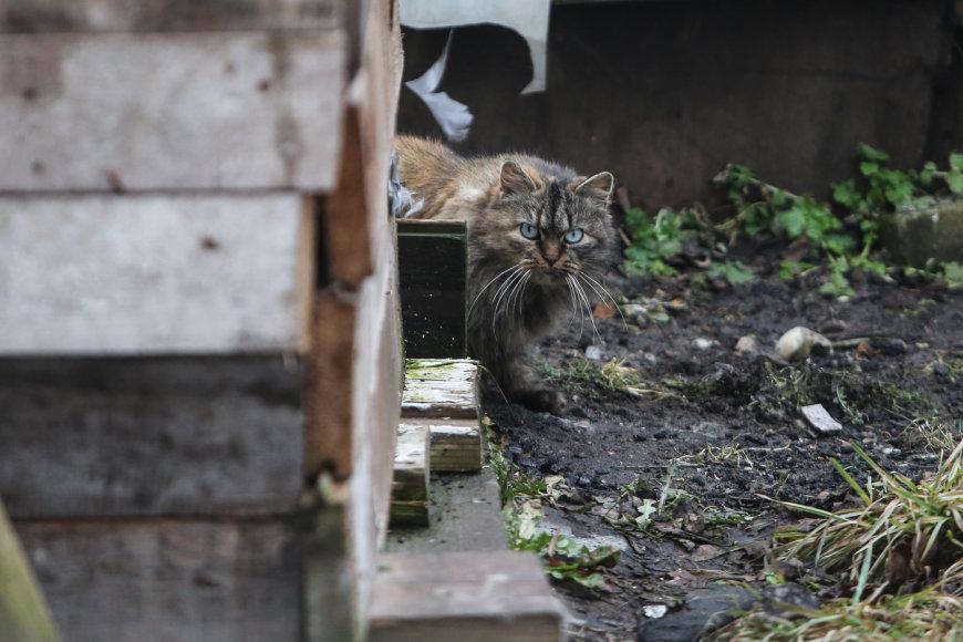 Benamės katės – dažnas vaizdas Karostos gatvėse.
