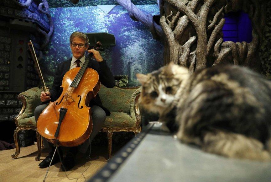 Violončelininkas Davidas Teie išleido albumą katėms