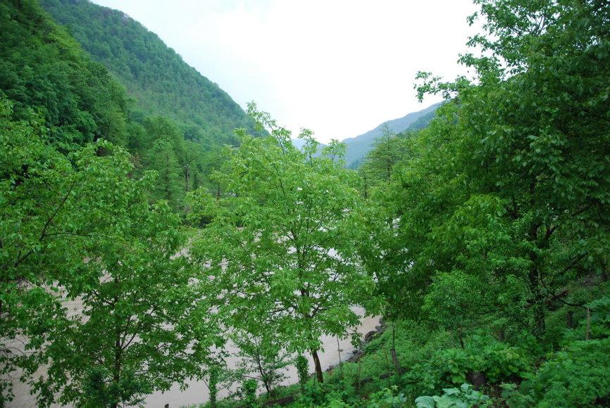 Gamta šalia Batumio