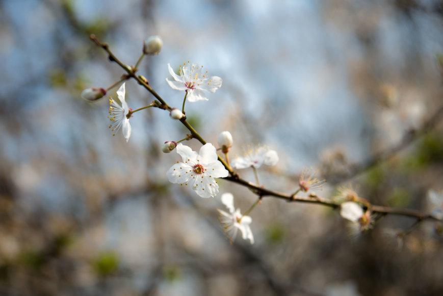 Pavasaris – laikas pažvelgti naujai