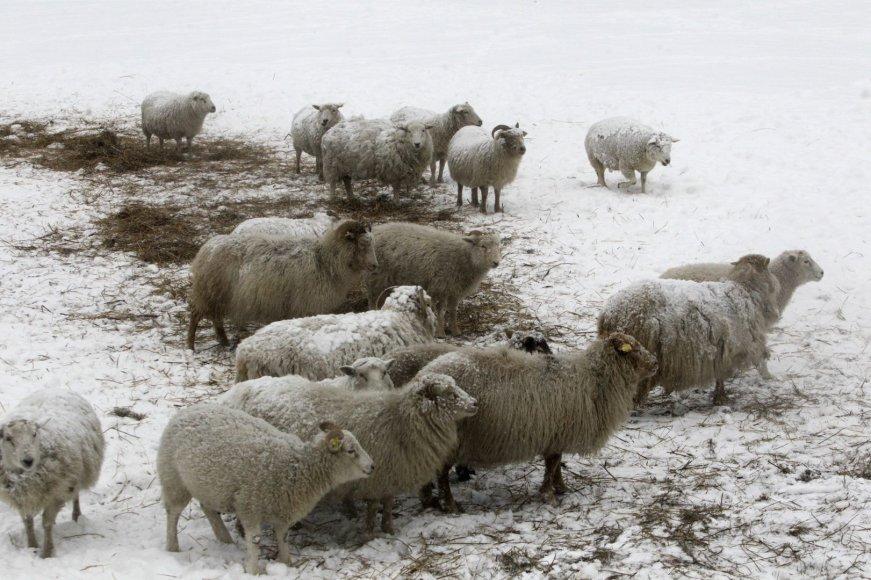Sniegas Estijoje