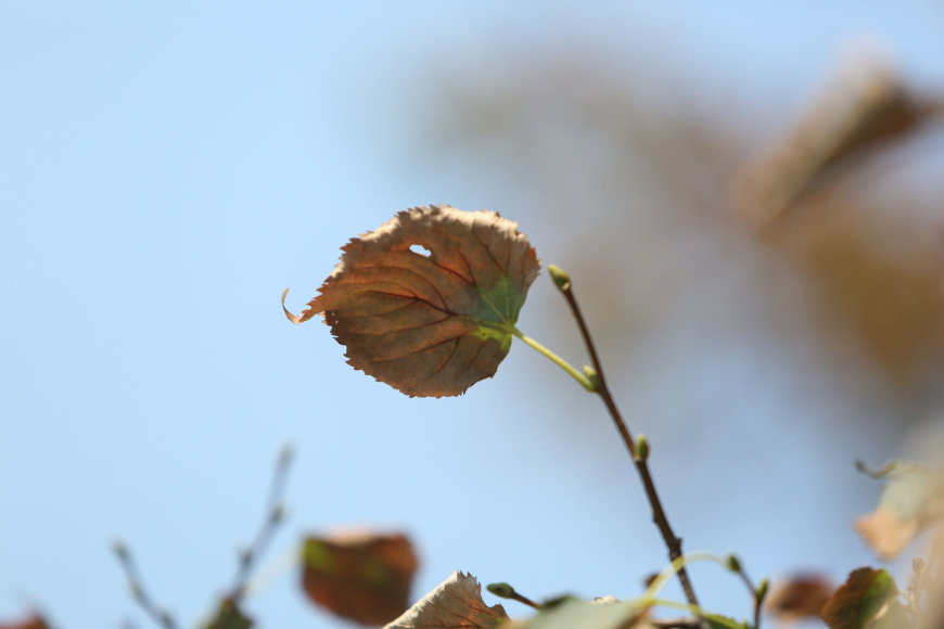 Medžiai meta lapus