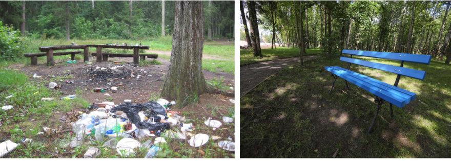 Prišiukšlintas miškas ir tvarkinga aplinka