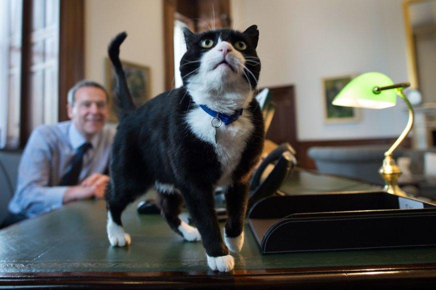 Katinas Palmerstonas