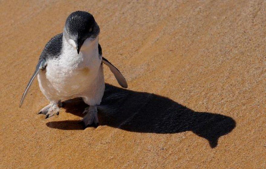 Pingvinukas