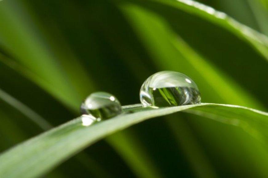 Žolė po lietaus