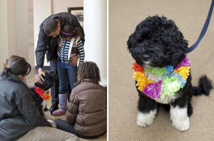 Šešių mėnesių Bo taps Obamų šeimos nariu.