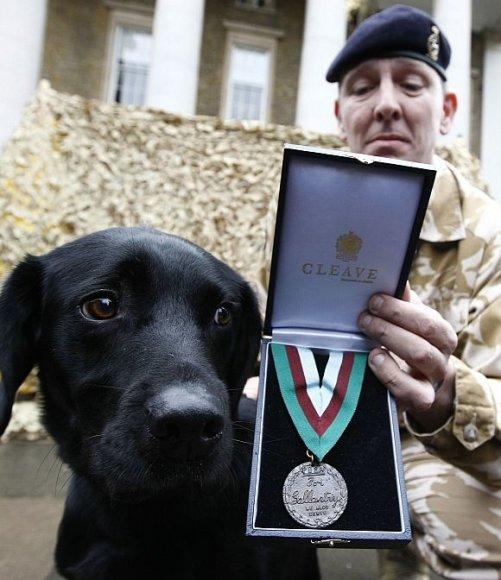 Labradoras Treo ir jo partneris seržantas Dave'as Heyhoe