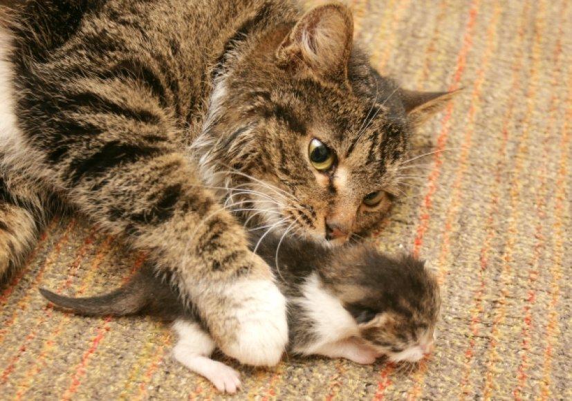 Katė su kačiuku