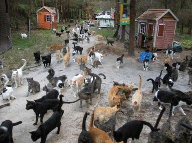 Kačių miesto gyventojos