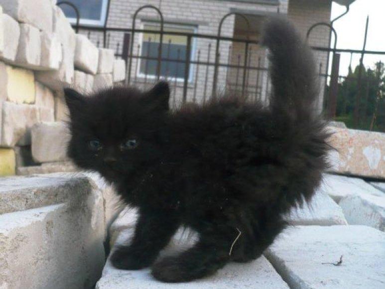 Juodas kačiukas