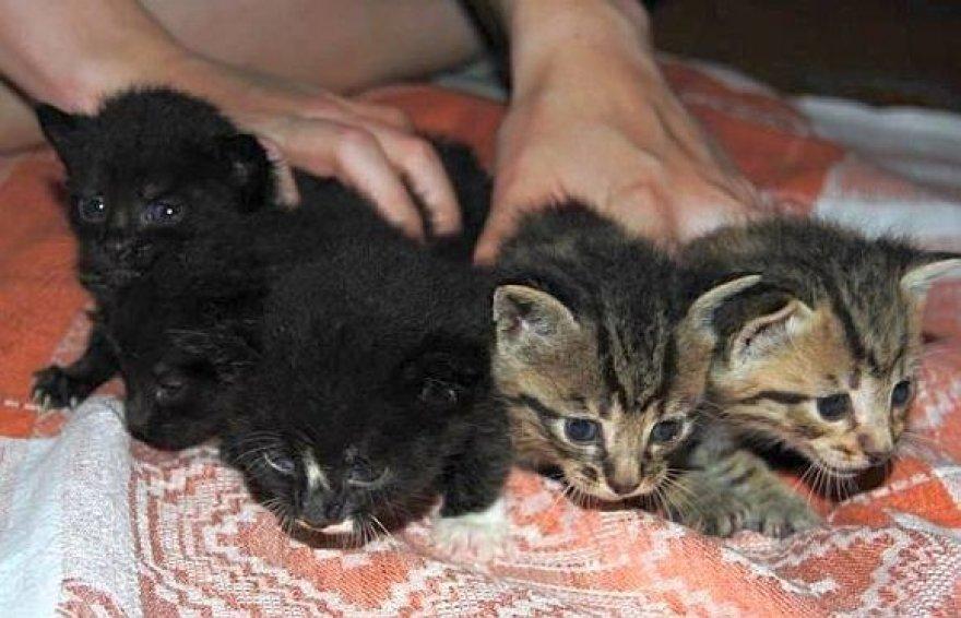 Penki išgelbėti kačiukai