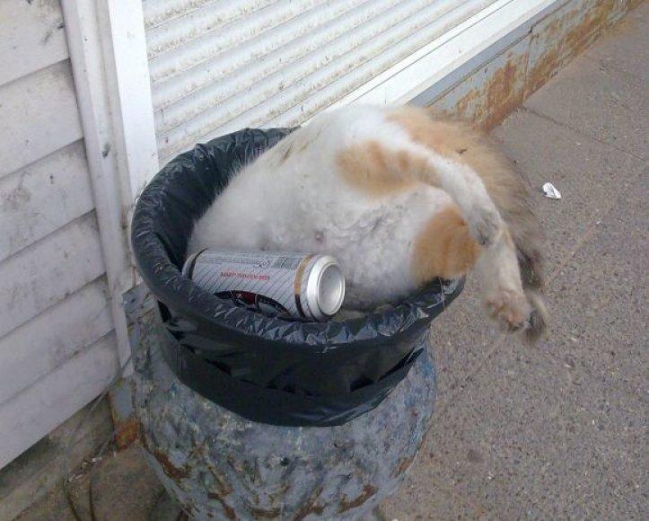 Negyva katė šiukšliadėžėje