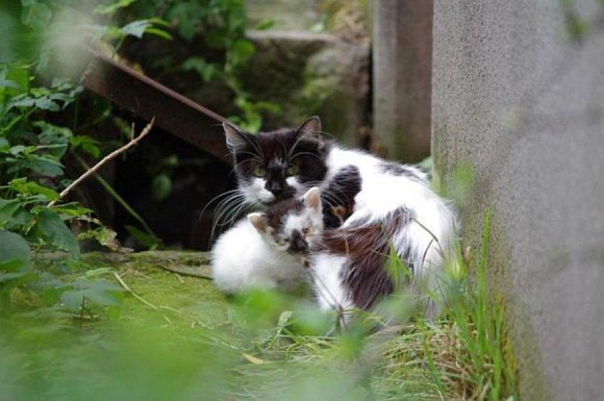 Benamių kačių šeimyna