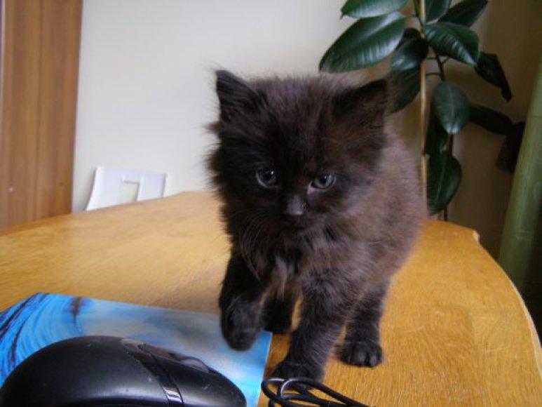 Dovanojamas kačiukas