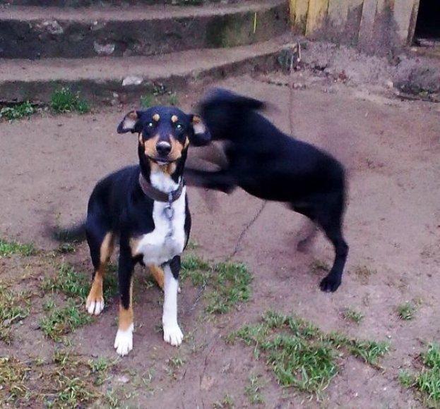 Dovanojama kalytė ir jos šuniukas