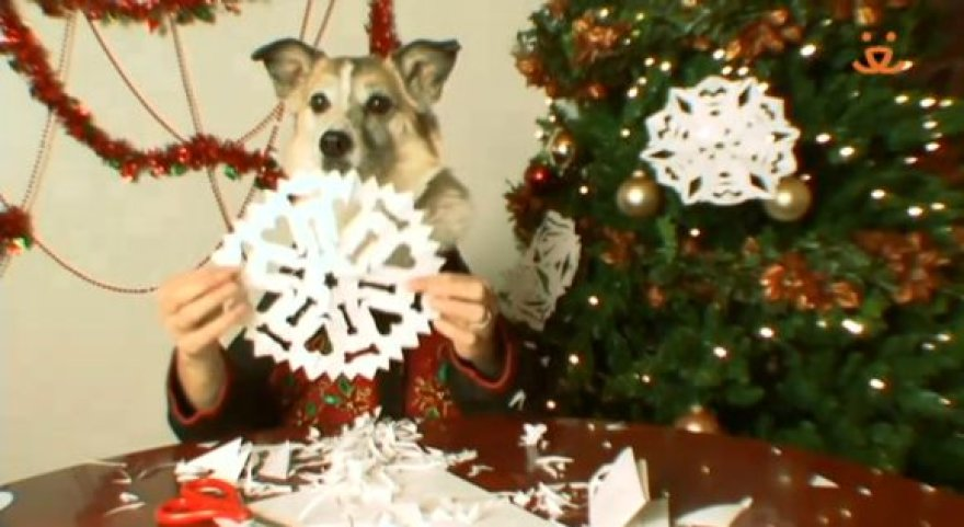 Taip šuneliai ruošiasi Kalėdoms.