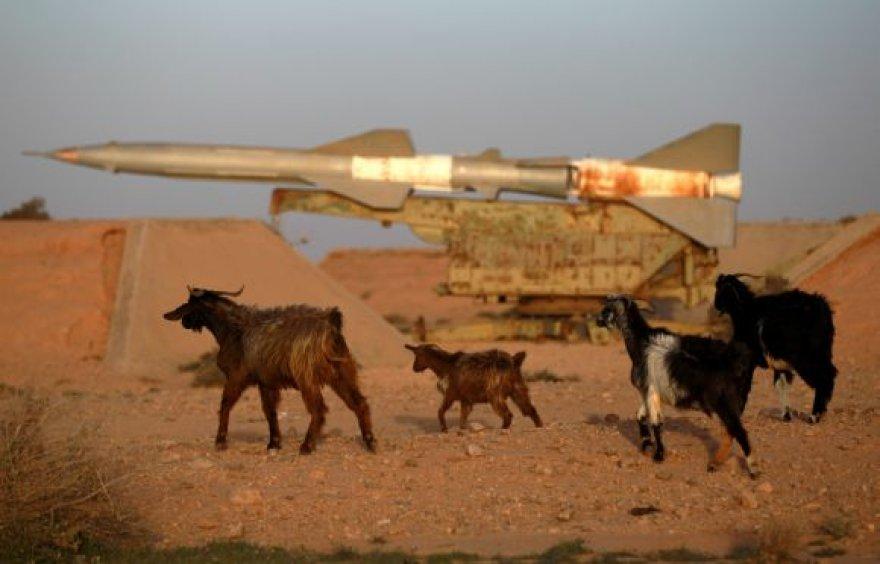 Ožkos vaikštinėja po karinę bazę netoli Tobruko, kurią paliko vyriausybei ištikimi daliniai.