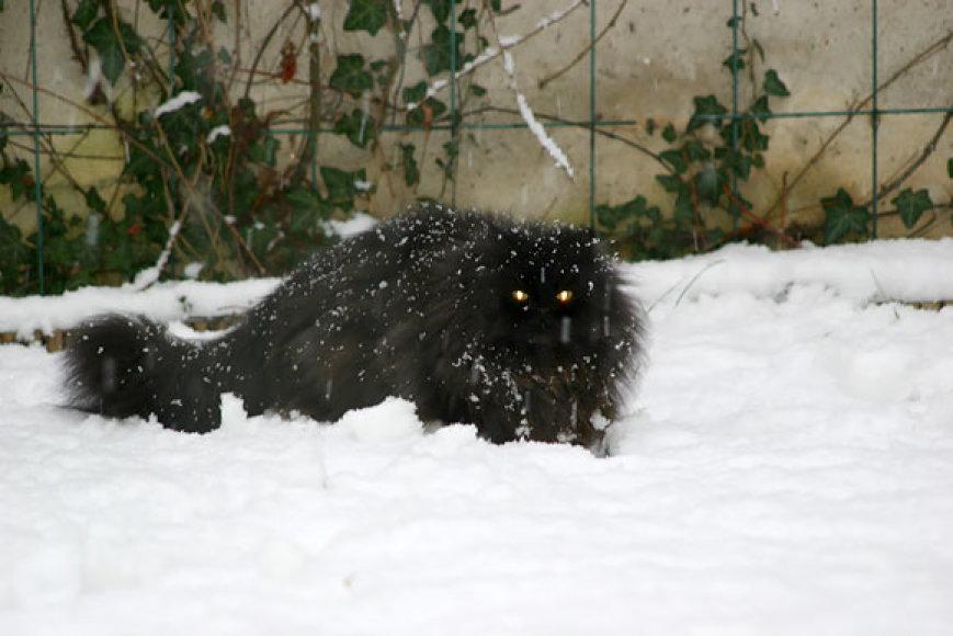 Katė ant sniego