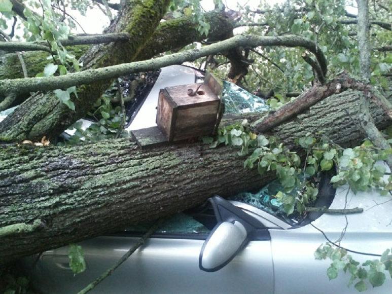 Vilniaus senamiestyje ant automobilio nuvirtęs medis