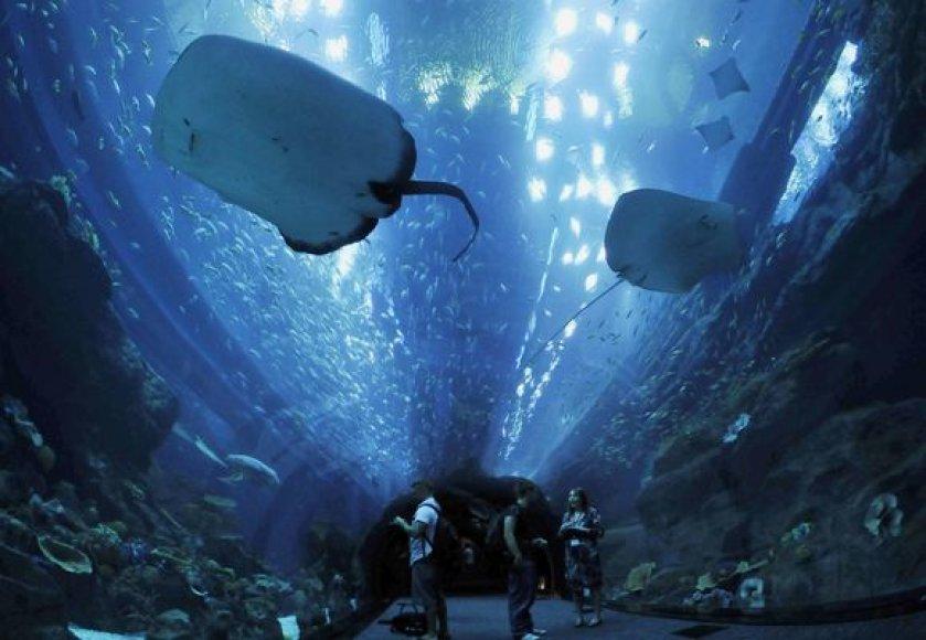 """Dubai Mall"" akvariumas"
