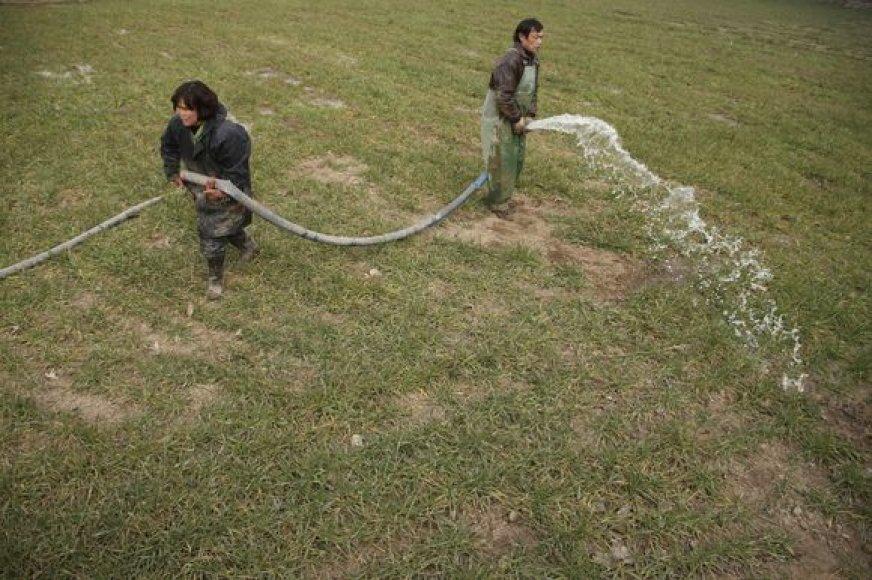 Kinijos ūkininkai laisto nuo sausros kenčiančius kviečius.