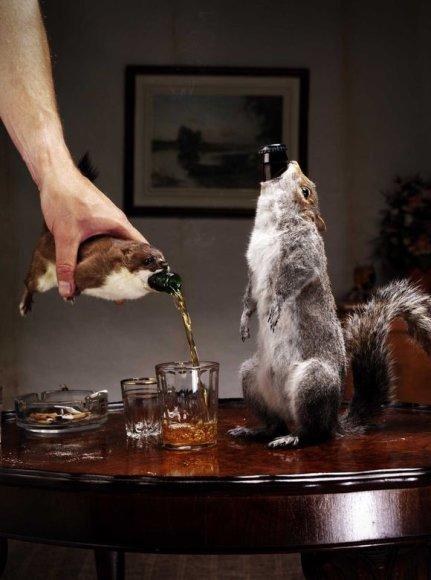 Naujasis alus pakuojamas į šermuonėlių arba voverių iškamšas