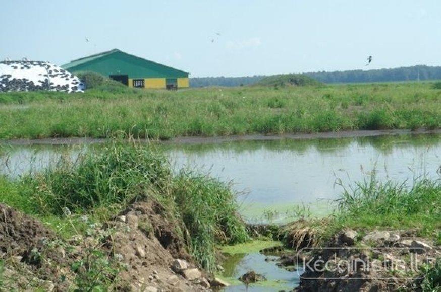Kvapai sklinda iš Kėdainių rajono Aristavos žemės ūkio bendrorvės.