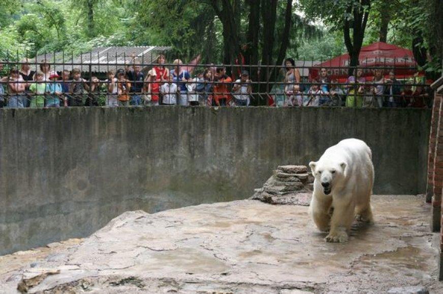 Kaune esančiame zoologijos sode daugiausia lankytojų apsilanko savaitgaliais ir švenčių metu.