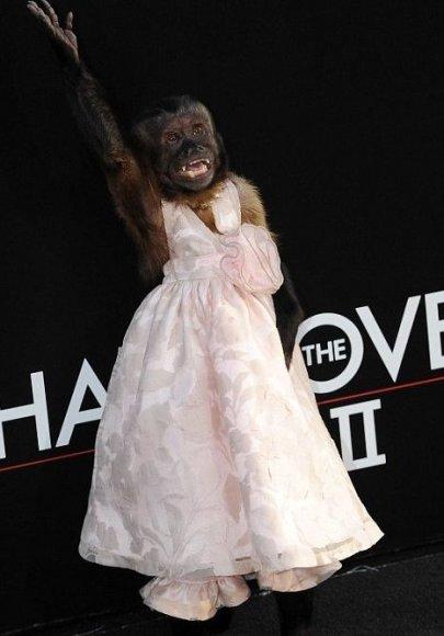 Beždžionėlė Crystal premjeroje