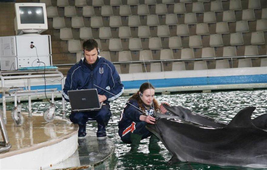 """Pirmieji iššifruoti delfinų garsai, dar kartą įrodė, jog šie gyvūnai – aukšto intelekto ir motyvuoti. Jų """"kalbą"""" sudaro trumpi, daugiausiai dviejų žodžių sakiniai: """"Noriu žuvies"""", """"Noriu miego"""", """"Nenoriu žaisti"""" ir pan."""