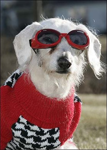 Seniausias šuo šventė gimtadienį.