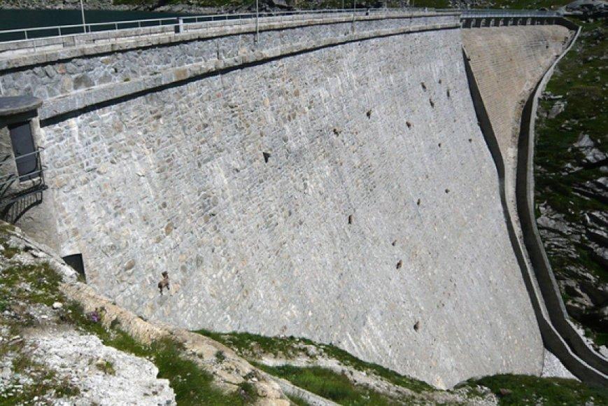 Užtvankos siena tapo kalnų ožių ganykla.