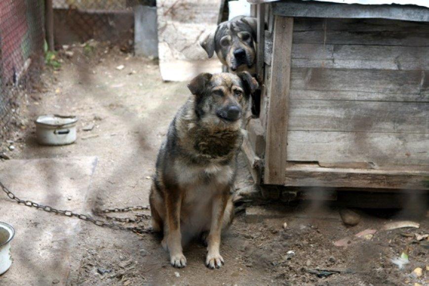 Sunaikinimui pasmerkti garažų bendrijos šunys
