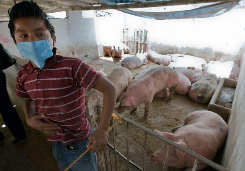Europos Sąjungos pareigūnai svarsto, kad dėl kiaulių gripo reikėtų sustabdyti skrydžius į Meksiką.