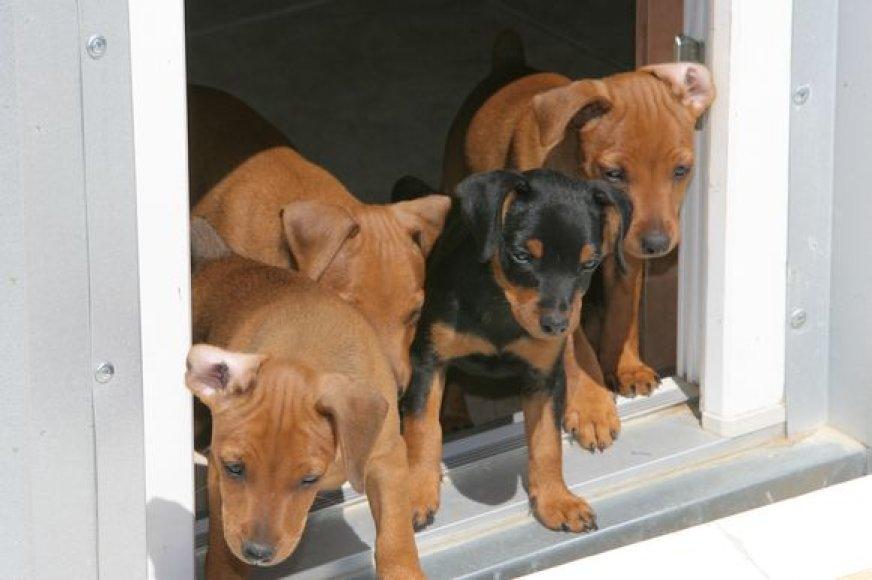 Pasak gyvūnų globėjų, dėl gausėjančių benamių gyvūnų atsakingi ir gyventojai.