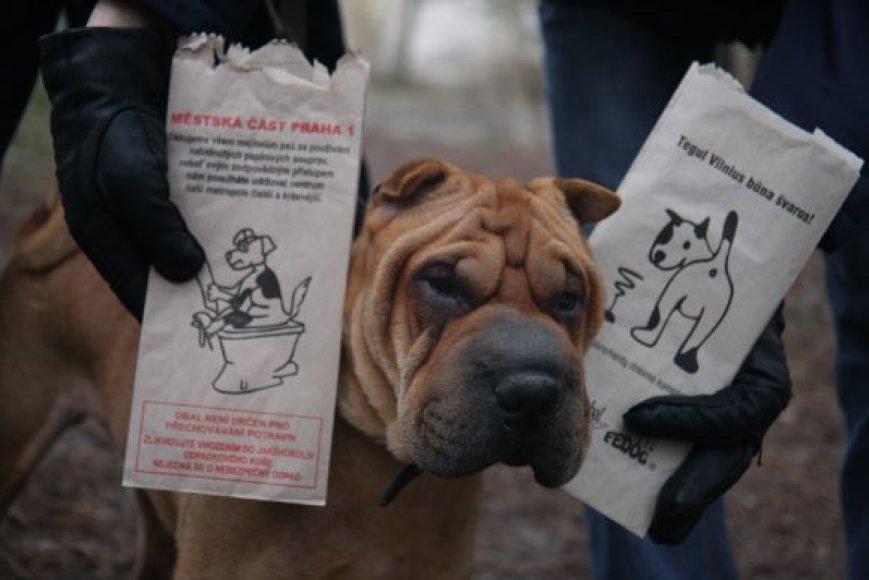 Šunų šeimininkams, nesurenkantiems ekskrementų, gresia baudos.