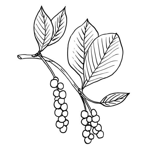 Jurgos Radzevičiūtės iliustracija/Kininis citrinvytis