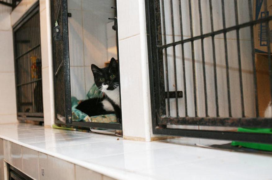 """Kauno gyvūnų globos namuose """"Nuaras"""" (Šv. Gertrūdos 46) beglobės katės laukia naujų šeimininkų"""