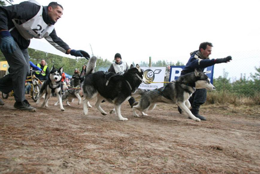 """Tarptautines šunų kinkinių ir orientacinio žygio su šunimis varžybos """"2009-uosius palydint... arba Kalėdinė taurė"""""""